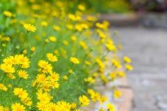 Gelbe Blume am Bürgersteig Stockfotografie
