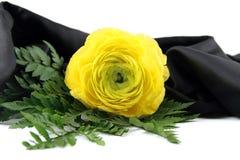 Gelbe Blume in der Blüte Stockfotos