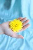 Gelbe Blume der Chrysantheme auf einer Hand Lizenzfreies Stockfoto