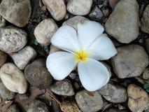 Gelbe Blume der Ringelblume lizenzfreies stockbild