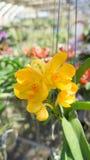 Gelbe Blume der Schönheit Lizenzfreies Stockfoto