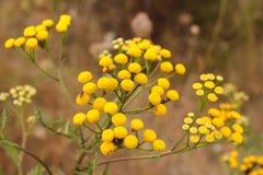 Gelbe Blume in der Sonne an einem Sommertag Stockfotografie