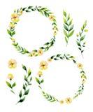 Gelbe Blume des Aquarells und Krautkreissatz Stockbilder