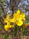 Gelbe Blume, die mit noblem Blick gut schaut stockbilder