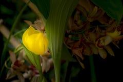 gelbe Blume in einem Park Stockfotografie