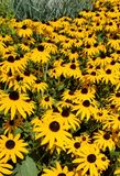 Gelbe Blume f stockfotos