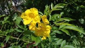 Gelbe Blume, Honey Bee lizenzfreies stockfoto