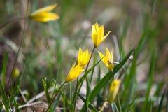 Gelbe Blume im üppigen grünen Gras Stockbilder