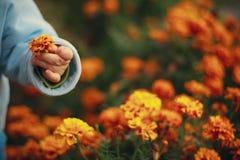 Gelbe Blume im Arm eines kleines Kindes Stockfotografie