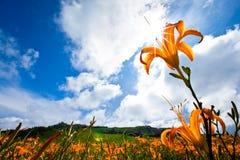 Gelbe Blume im Berg Stockfotografie