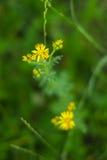 Gelbe Blume im grünen Gras Konzept der empfindlichen Natur Stockbilder