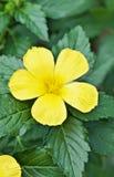 Gelbe Blume im Schmetterlingsgarten lizenzfreie stockbilder