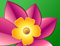 Gelbe Blume mit den rosafarbenen Blumenblättern Lizenzfreie Stockfotografie