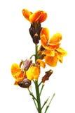 Gelbe Blume mit einer Schnecke Stockbilder