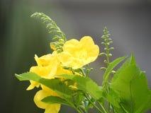 Gelbe Blume mit grünen Blättern Stockbild