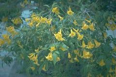 Gelbe Blume mit Weinlesefarbart Stockbilder