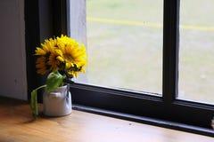 Gelbe Blume nahe Fenster Stockbilder