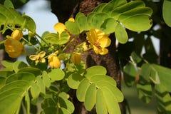 Gelbe Blume schön mit Sonnenlicht stockbild
