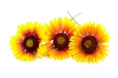 Gelbe Blume trennte Lizenzfreie Stockfotos