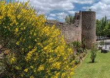 Gelbe Blume um alte Wand in Ronda, Spanien Lizenzfreies Stockfoto