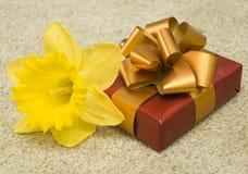Gelbe Blume und Geschenk Lizenzfreie Stockfotos