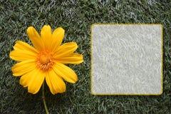 Gelbe Blume und Mitteilungskasten Stockfotografie