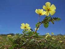 Gelbe Blumen Lizenzfreies Stockbild