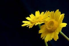 Gelbe Blumen lizenzfreie stockfotos