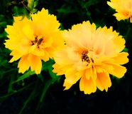 Gelbe Blumen Stockfotos