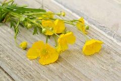Gelbe Blumen Imagenes de archivo