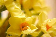 Gelbe Blumen Stockbild