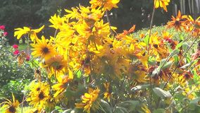 Gelbe Blumen stock video footage