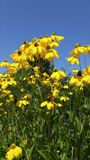 Gelbe Blumen Lizenzfreie Stockfotografie