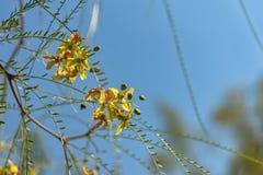 Gelbe Blumen auf blauem Segeltuch lizenzfreie stockfotos