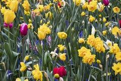 Gelbe Blumen auf dem Feld lizenzfreie stockfotos