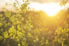 Blumen auf dem Gebiet am Sonnenuntergang Stockfoto