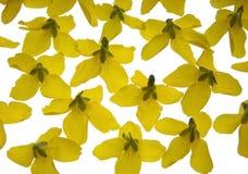 Gelbe Blumen auf dem hellen Kasten lizenzfreies stockfoto
