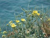 Gelbe Blumen auf den Felsen stockfotos