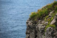 Gelbe Blumen auf der Spaltung gegen das Meer stockfotografie