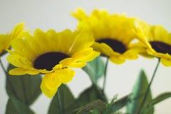 Gelbe Blumen auf einem hellen Hintergrund Stockfoto
