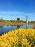 Gelbe Blumen auf einem Hintergrund des Sees und des blauen Himmels lizenzfreies stockfoto