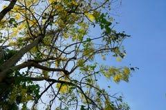 Gelbe Blumen auf Hintergrund des blauen Himmels oben schauen lizenzfreie stockbilder