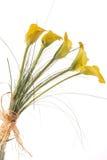 Gelbe Blumen auf Weiß Stockfotografie