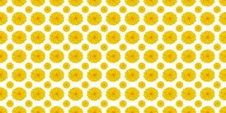 Gelbe Blumen auf Weiß stock abbildung