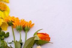 Gelbe Blumen auf weißem backround Stockfoto