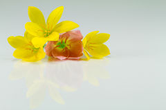 Gelbe Blumen auf weißem Hintergrund Lizenzfreie Stockfotos