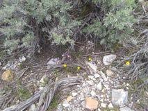4 gelbe Blumen bepflanzen Bodenfelsen mit B?schen stockbild