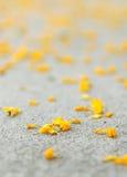 Gelbe Blumen-Blumenblätter Stockfotos