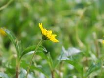 Gelbe Blumen in der Garten Gefühls-Auffrischung lizenzfreie stockbilder