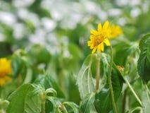 Gelbe Blumen in der Garten Gefühls-Auffrischung stockfoto